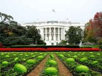 White House Watermelons