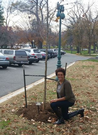 Emmett Till Memorial Tree - FMA Knee