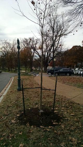 Emmett Till Memorial Tree